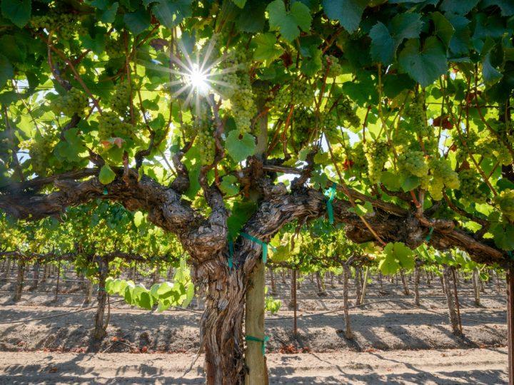 Wine & Spirits Reviews Spell Pinot Noir